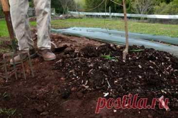 12 осенних подкормок для растений на даче, чтобы в следующем сезоне сад благоухал и плодоносил   Design-homes.ru   Пульс Mail.ru Покажем подборку подкормок для растений в саду, которые лучше вносить осенью.
