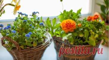 Лучшие дачные растения, которые можно выкопать и выращивать зимой дома на Supersadovnik.ru