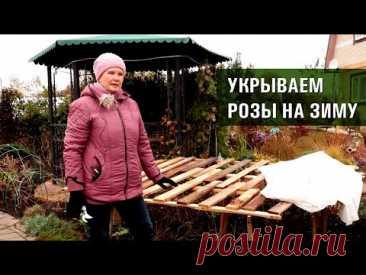 Обрезка роз осенью. Три способа укрытия роз на зиму.