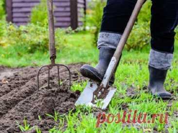 Лунный календарь садовода-огородника на май 2021 года - Новости в России - u24.ru