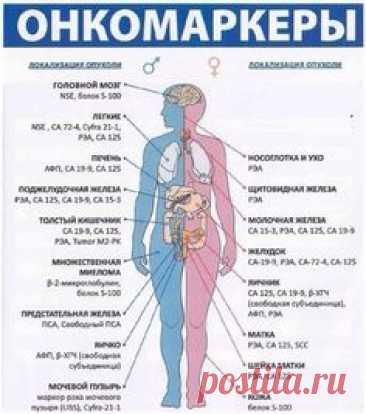 ОНКОМАРКЕРЫ Перечень онкомаркеров, которые имеют значение при диагностике злокачественных опухолей: - АФП (альфа-фетопротеин) - онкомаркер первичного рака печени. Данные получаемые по результатам теста на АПФ могут быть использованы для диагностики присутствия пороков п..
