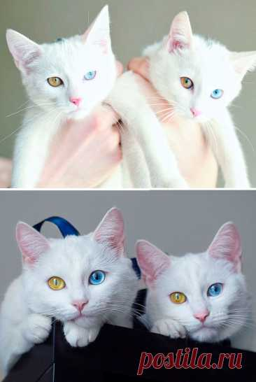 45 котят, которые выросли в красивейших кошек. Потрясающие трансформации!