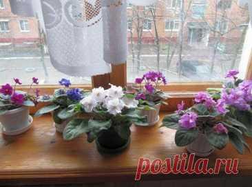 1 мл препарата из аптеки и цветы оживают и цветут без остановки - мой опыт   Садовник   Яндекс Дзен