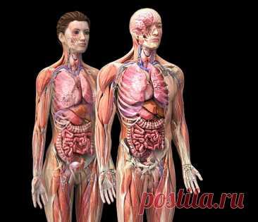 Мощное средство воздействия на метаболические процессы