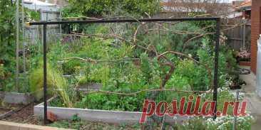 с чего начать выращивание винограда на даче своими руками - 18 тыс. картинок - Поиск Mail.Ru