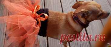 Вязание одежды для собак – пачка для собаки