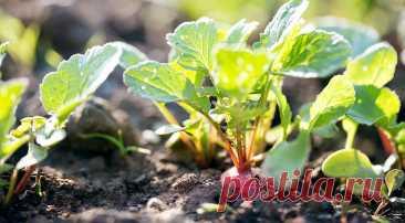 Какие овощи можно сажать в июле? на Supersadovnik.ru