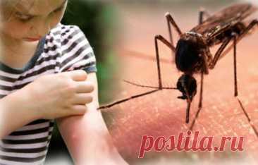 El tratamiento de las picaduras de los insectos por los medios públicos