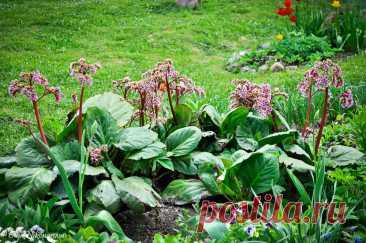 Создаем сад в природном стиле! | Терра Дома | Яндекс Дзен