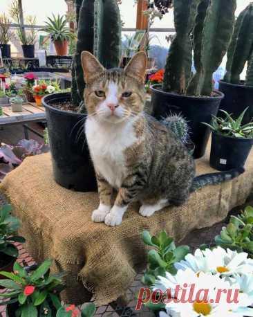 Кошки в магазинах: 18 фото. Это маркетологи особого класса - Без кота и жизнь не та