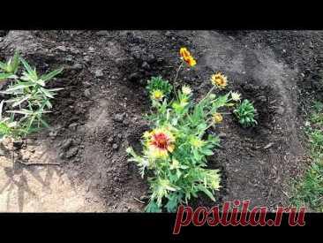 Как я размещал цветы многолетники на участке