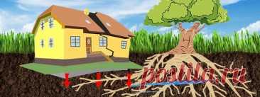 Какие деревья способны разрушить дом: не сажаем во дворе Частное домовладение без сада трудно себе представить. Даже если места на участке совсем немного, владелец всё равно посадит у дома хотя бы парочку деревьев. Принимая же такое решение, нужно хорошо всё взвесить и узнать, какую корневую систему развивает данное дерево. Проблема в том, что безобидное желание отдохнуть под тенью яблоньки может обернуться потерей дома в буквальном смысле этого слова. Какой вред может нан...
