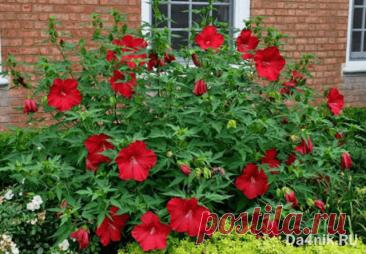 Многолетние цветы: какие красивые и неприхотливые посадить на даче? | 6 соток