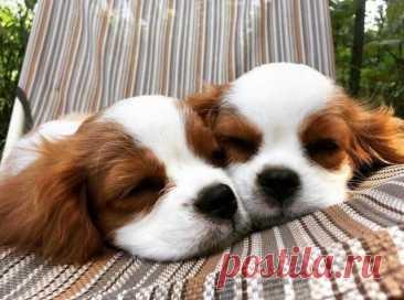 Большой Калейдоскоп фоток очаровательных щенят, котят