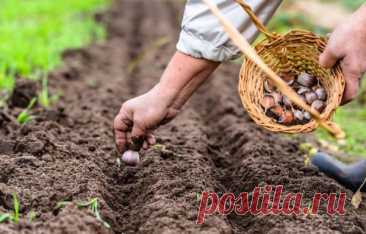 Что можно посадить под зиму в огороде: 10 культур | Дачный труженик | Яндекс Дзен