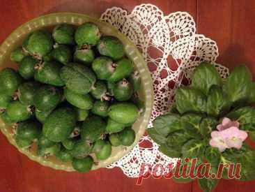 Как я заготавливаю на зиму очень полезную ягоду ФЕЙХОА   Марусино рукоделие   Пульс Mail.ru Начался сезон