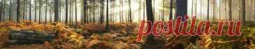Скинали осенний лес изображения для кухонного фартука