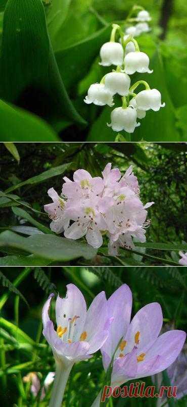 Красивые, но очень опасные цветы. Список самых привлекательных, но не менее опасных цветов в мире: