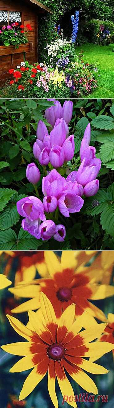 """""""Бабушкин"""" палисадник. Основное правило такого сада: «посадить все красивое и неприхотливое».С чего начать при создании палисадника?"""