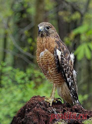 спортивно-игровые картинки царь птица животное