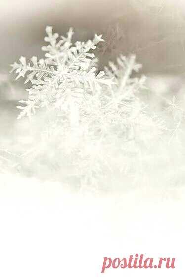 Так снега захотелось... Хлопьями, летящего с небес, Чтоб земля невестою оделась И туман над городом исчез... (с)