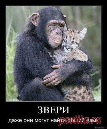 Даже звери могут найти общий язык. Афоризмы в картинках..
