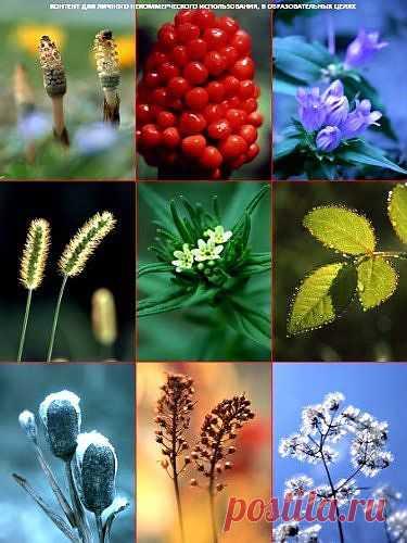 Клипарт – Сезонные цвета » RandL.ru - Все о графике, photoshop и дизайне. Скачать бесплатно photoshop, фото, картинки, обои, рисунки, иконки, клипарты, шаблоны.