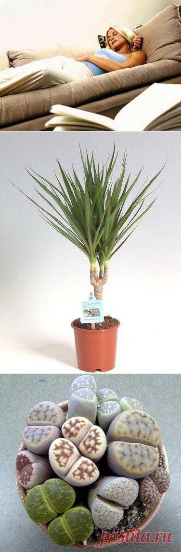 ТОП-10 неприхотливых комнатных растений. Для тех, кто любит растения в доме и для тех, кто также любит путешествовать и отдыхать дома.