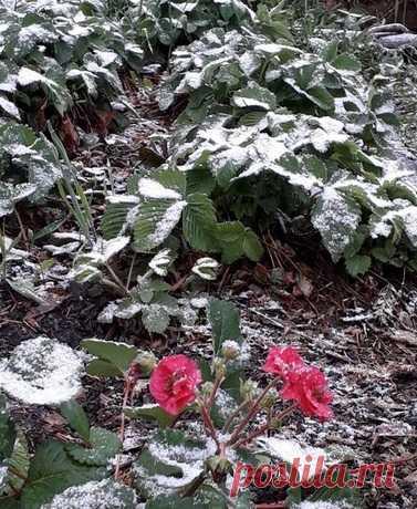 В Башкирии и Челябинской области выпал снег Скоро лето - выпал снег! Местные жители удивляются капризам погоды. Снег выпал в Челябинской области и Башкирии.