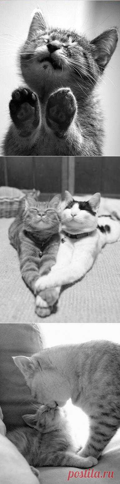 Кошачьей нежности пост
