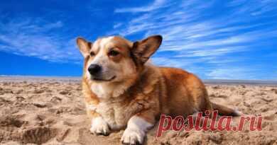 Você sabe por que os cães inclinam a cabeça? - Adote um Cachorro