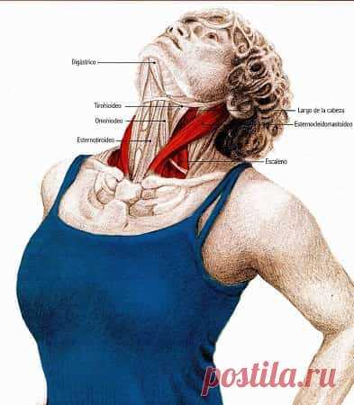Комплекс упражнений для шеи: Освобождают от зажимов