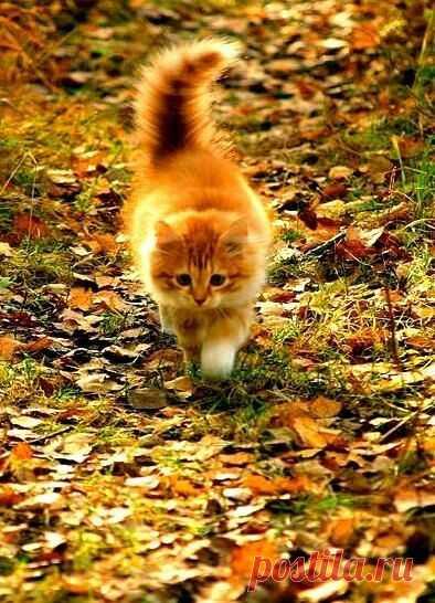 А может, Осень для того и создана в жёлто-оранжевых тонах,                                                            чтобы нам было тепло, светло, уютно и просто заМУРчательно... -----------------------------------------------