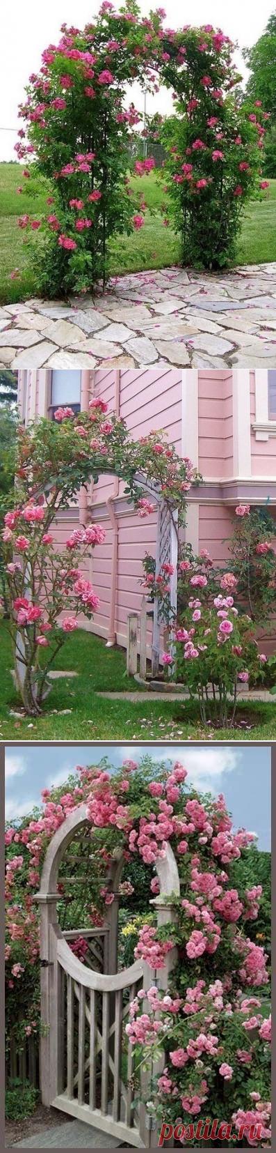 Прекрасные арки из цветов