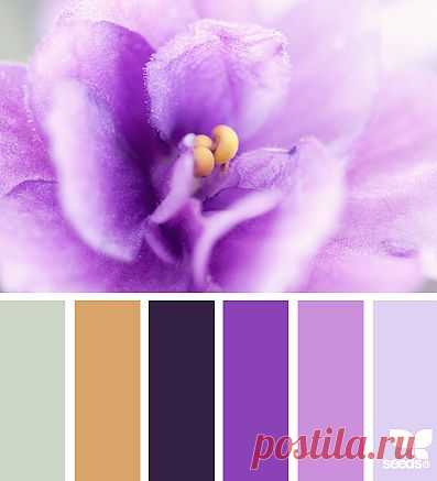 for all who ❤ color | petalled palette