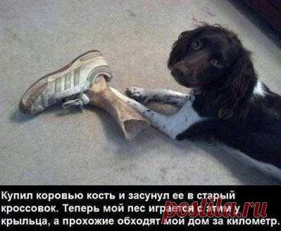 Смешные картинки, мемы и лучшие шутки Рунета.-Новости Дня