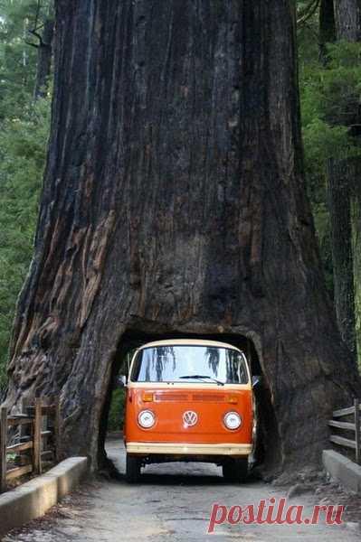Удивительно. Тоннель в дереве!
