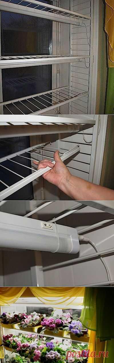 Жилищный вопрос: удобные стеллажи для фиалок на пластиковых окнах.