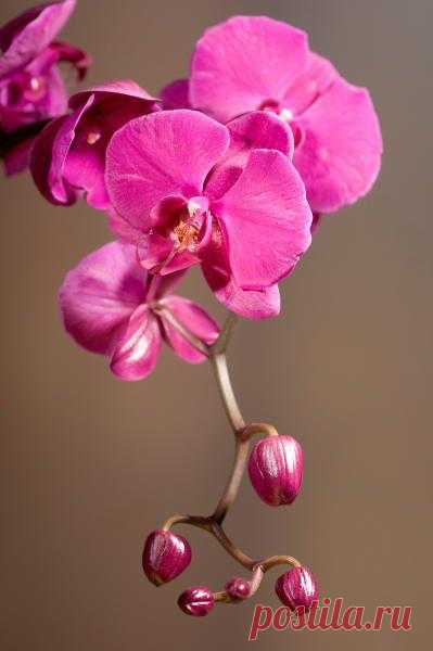 АртПостерГалерея — Постеры на стену / Постеры цветы / Орхидеи — Орхидея