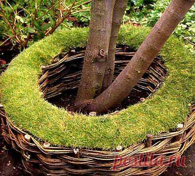 Плетеный заборчик вокруг дерева.