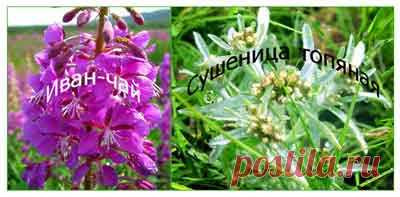 Травы после коронавируса   Народные рецепты здоровья Травы после коронавируса. Реабилитация после болезни может растянуться на несколько месяцев, а травы помогут организму быстрее восстановиться