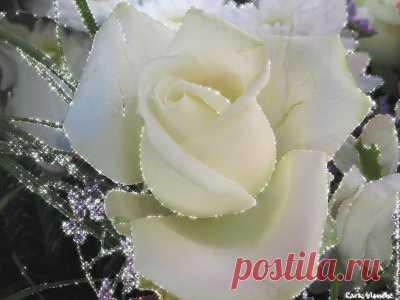 Огурцы в томате на зиму - обалденный рецепт.