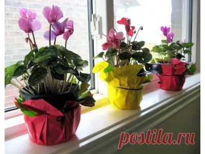 Уход за комнатными растениями, фото комнатных растений. Энциклопедия комнатных растений: уход за комнатными растениями, фото и названия