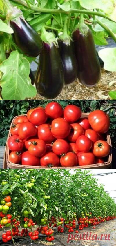 Биоудобрение позволяет получать с одной и той же площади земли намного больше овощей и фруктов. К примеру прирост урожайности составит:  Картофель: 48,7% Томаты: 45% Огурцы: 79% Капуста: 22% Лук-репка: 32% Фрукты: 30% Помимо урожайности, повышаются вкусовые и полезные свойства продуктов, а также их размер и форма (что может быть важно для тех, кто занимается выращиванием сельскохозяйственной продукции на продажу). Улучшаются практически все показатели. Удобрение было неодн...