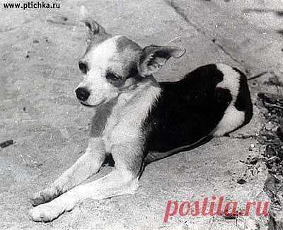 История обычной собачки - Bсе для людей!
