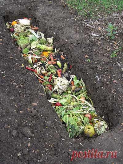 Использование овощных отходов на даче