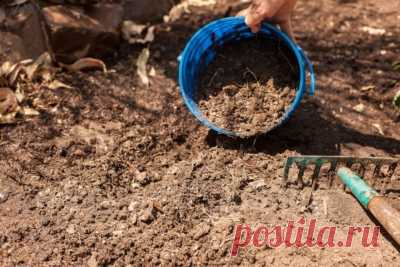 Подготовка почвы перед посадкой озимого чеснока: советы Русский фермер