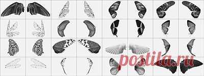 Кисти для фотошопа - Крылья, скачать бесплатно Кисти для фотошопа - Крылья без регистрации