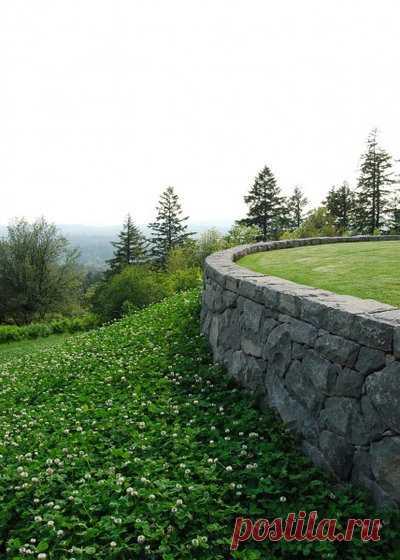 Почвопокровные растения для сада, названия и фото: зеленый ковер из многолетних цветов и трав, цветущий все лето