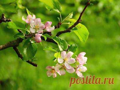 Календарь работ в июне: сад, огород, цветник, домашняя оранжерея — FloraPrice.Ru